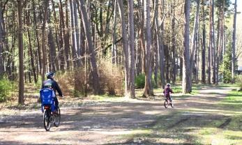 pyörällä metsässä