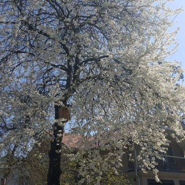 valkoisia kukkia