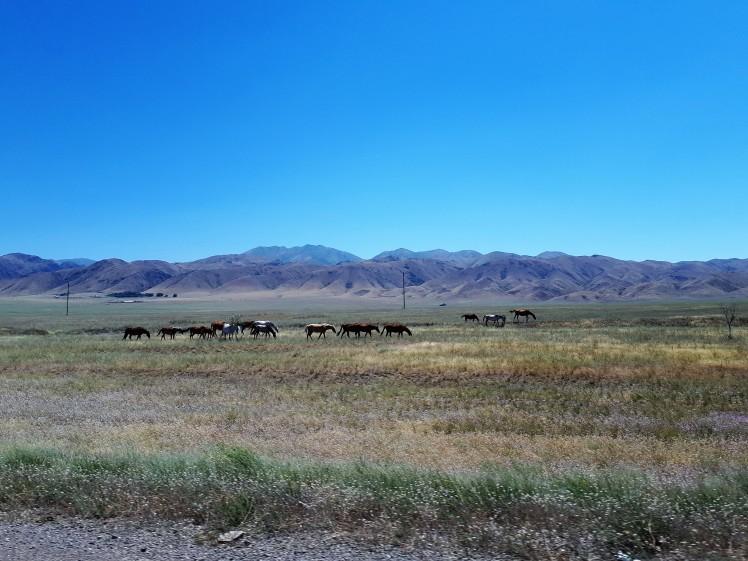 Villihevosia Almatystä länteen