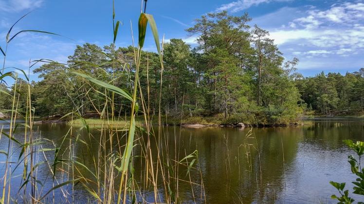 Pentalanjärvi ja sen saari